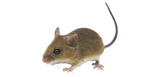 Get rid of mice the humane way with Teeter Totter Trap